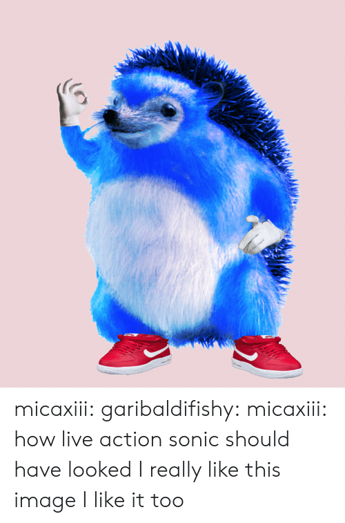 Tumblr, Blog, and Http: micaxiii:  garibaldifishy:  micaxiii:  how live action sonic should have looked  I really like this image  I like it too