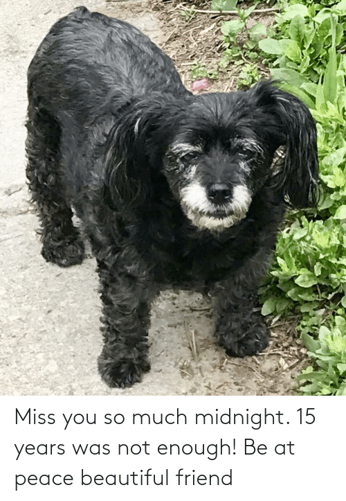 at-peace: Miss you so much midnight. 15 years was not enough! Be at peace beautiful friend