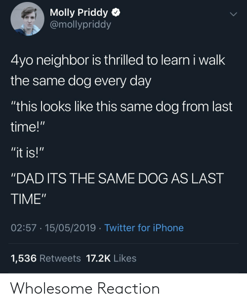 """Dad, Iphone, and Molly: Molly Priddy Q  @mollypriddy  4yo neighbor is thrilled to learn i walk  the same dog every day  """"this looks like this same dog from last  time!""""  """"DAD ITS THE SAME DOG AS LAST  TIME""""  02:57 15/05/2019 Twitter for iPhone  1,536 Retweets 17.2K Likes Wholesome Reaction"""