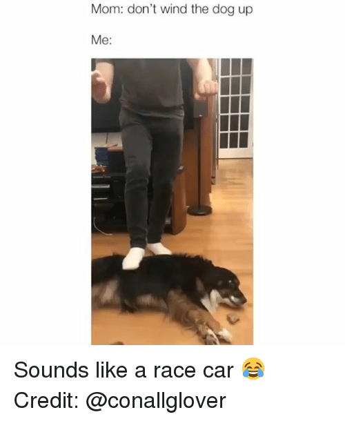 Memes, Race, and Mom: Mom: don't wind the dog up  Me: Sounds like a race car 😂 Credit: @conallglover