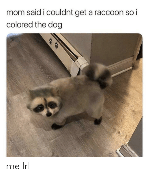 Raccoon, Irl, and Me IRL: mom said i couldnt get a raccoon so i  colored the dog me Irl