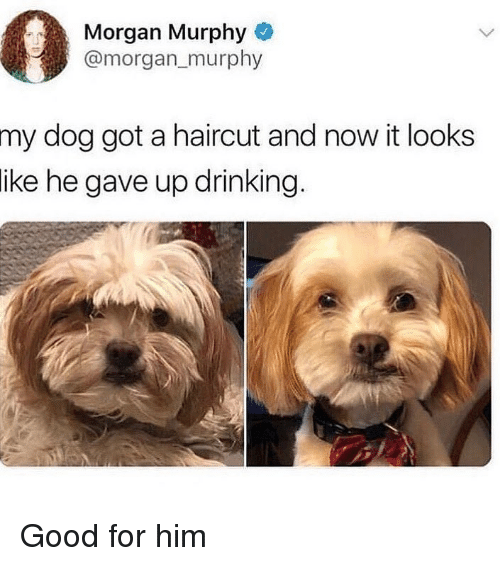 Drinking, Haircut, and Memes: Morgan Murphy  @morgan_murphy  dog got a haircut and now it looks  ike he gave up drinking.  my Good for him