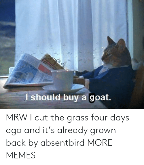 already: MRW I cut the grass four days ago and it's already grown back by absentbird MORE MEMES