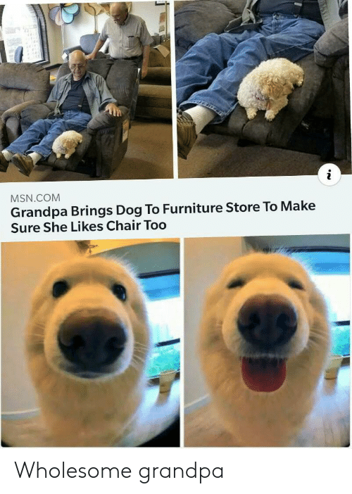 Grandpa, Furniture, and Wholesome: MSN.COM  Grandpa Brings Dog To Furniture Store To Make  Sure She Likes Chair Too Wholesome grandpa