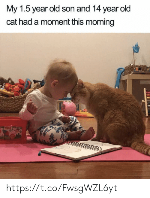 Memes, Old, and 🤖: My 1.5 year old son and 14 year old  cat had a moment this moming  ww https://t.co/FwsgWZL6yt