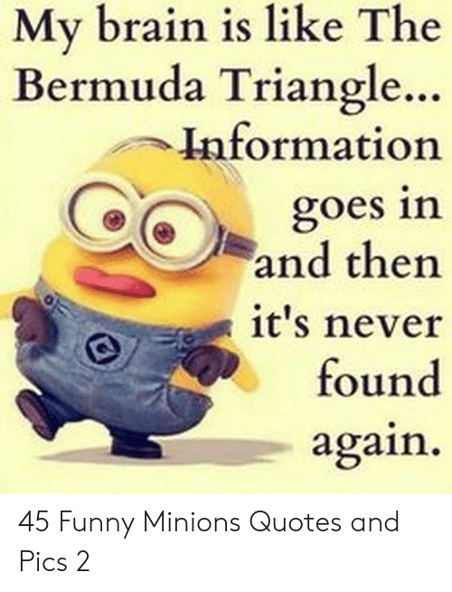 Bermuda Triangle, Funny, and Bermuda: My brain is like The  Bermuda Triangle..  Information  goes in  and then  it's never  found  again 45 Funny Minions Quotes and Pics 2