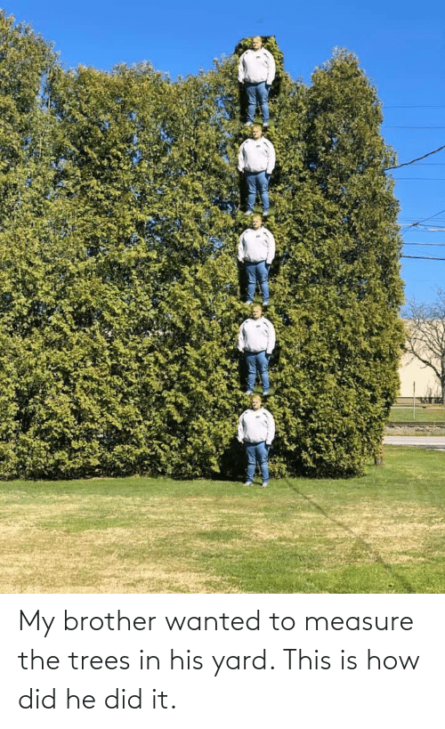 yard: My brother wanted to measure the trees in his yard. This is how did he did it.