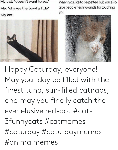 """Cats, Caturday, and Happy: My cat: *doesn't want to eat*  When you like to be petted but you also  give people flesh wounds for touching  Me: """"shakes the bowl a little*  you  My cat:  GMaP Happy Caturday, everyone! May your day be filled with the finest tuna, sun-filled catnaps, and may you finally catch the ever elusive red-dot.#cats 3funnycats #catmemes #caturday #caturdaymemes #animalmemes"""