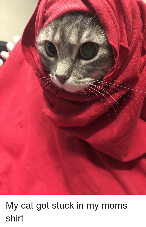 Funny, Moms, and Got: My cat got stuck in my moms shirt