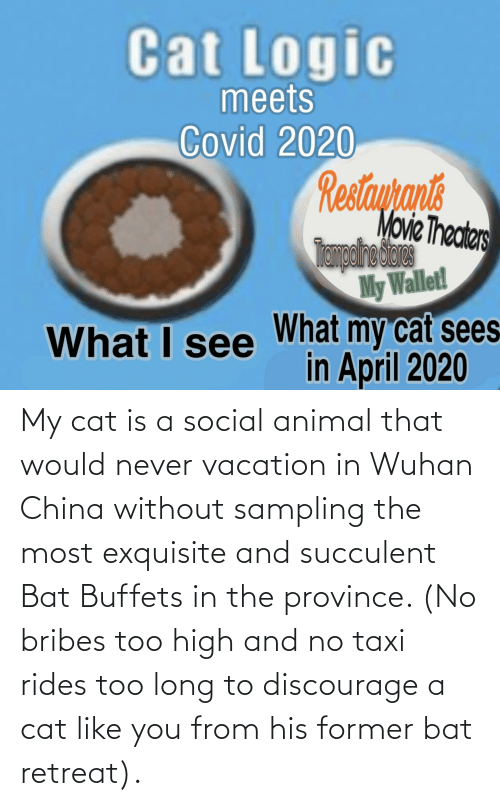Vacation: My cat is a social animal that would never vacation in Wuhan China without sampling the most exquisite and succulent Bat Buffets in the province. (No bribes too high and no taxi rides too long to discourage a cat like you from his former bat retreat).