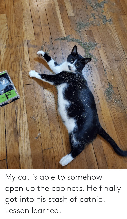 His: My cat is able to somehow open up the cabinets. He finally got into his stash of catnip. Lesson learned.