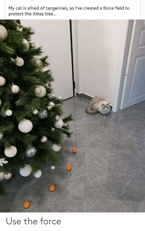 field: My cat is afraid of tangerines, so l've created a force field to  protect the Xmas tree... Use the force