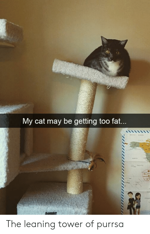 leaning tower: My cat may be getting too fat...  MIno The leaning tower of purrsa