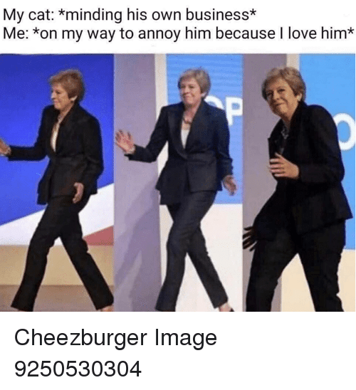 Love, Business, and Image: My cat: *minding his own business*  Me: *on my way to annoy him because I love him* Cheezburger Image 9250530304