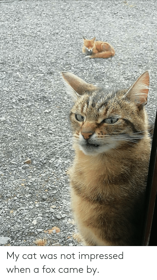 cat: My cat was not impressed when a fox came by.