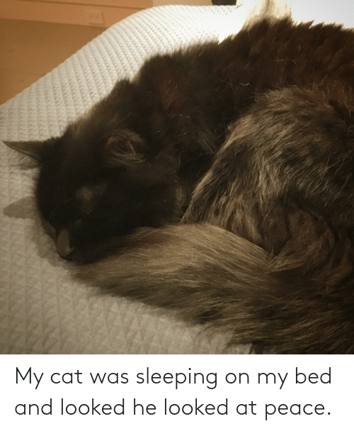 at-peace: My cat was sleeping on my bed and looked he looked at peace.