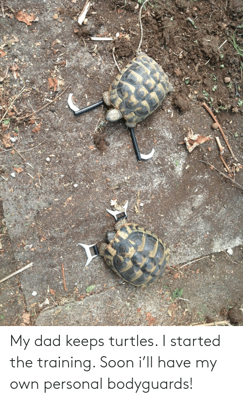 personal: My dad keeps turtles. I started the training. Soon i'll have my own personal bodyguards!