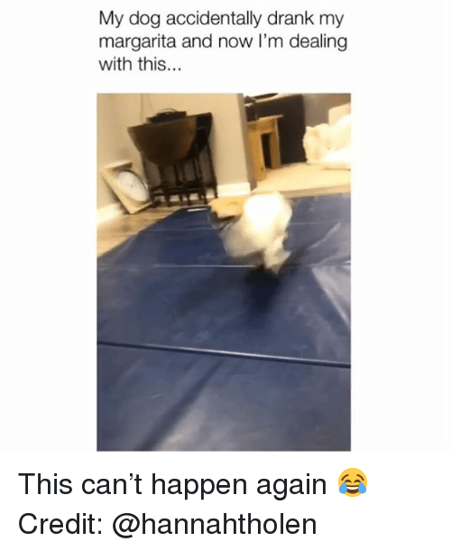 Memes, 🤖, and Dog: My dog accidentally drank my  margarita and now I'm dealing  with this... This can't happen again 😂 Credit: @hannahtholen
