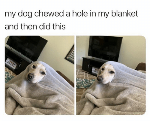 Dog, Hole, and Did: my dog chewed a hole in my blanket  and then did this