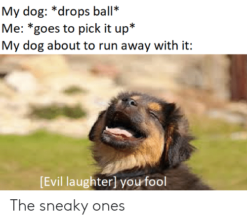 Run, Evil, and Dog: My dog: *drops ball*  Me: *goes to pick it up*  My dog about to run away with it:  Evil laughterl you fool The sneaky ones