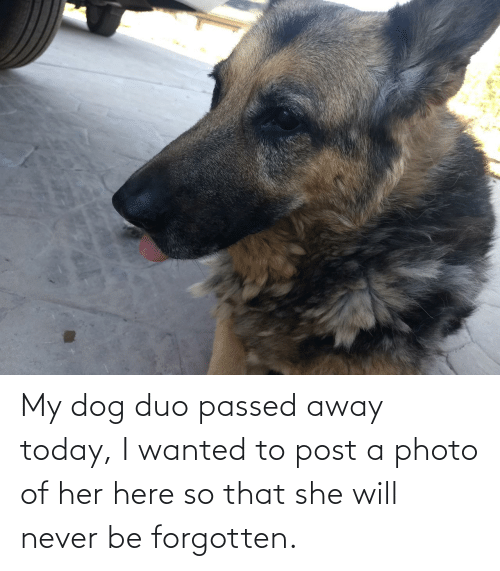 away: My dog duo passed away today, I wanted to post a photo of her here so that she will never be forgotten.