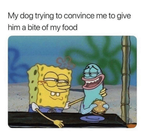Food, Dog, and Him: My dog trying to convince me to give  him a bite of my food