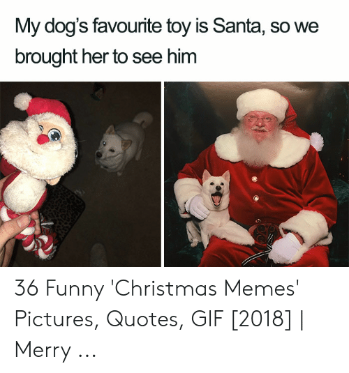 Christmas, Dogs, and Funny: My dog's favourite toy is Santa, so we  brought her to see him 36 Funny 'Christmas Memes' Pictures, Quotes, GIF [2018] | Merry ...