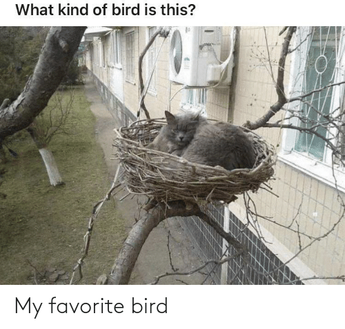 my favorite: My favorite bird
