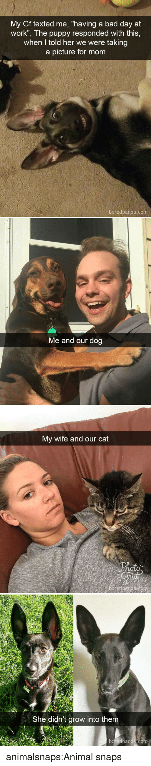 """Bad, Bad Day, and Target: My Gf texted me, """"having a bad day at  work"""", The puppy responded with this,  when I told her we were taking  a picture for mom  boredpanda.com   Me and our dog  My wife and our cat   She didn't grow into them  boreapanda,com animalsnaps:Animal snaps"""