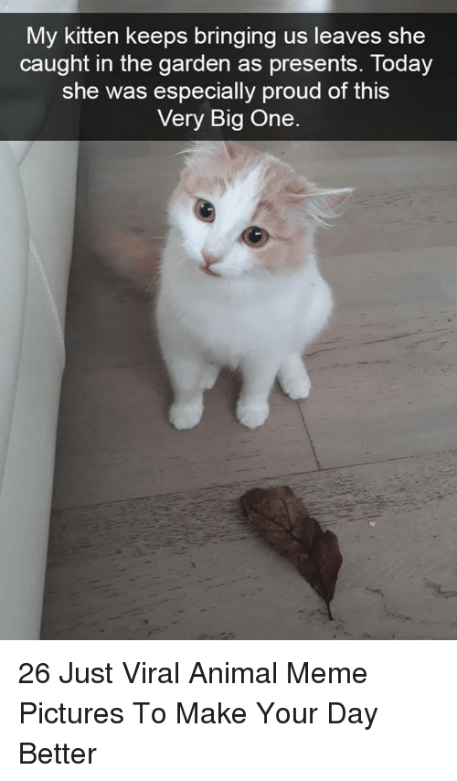 Meme, Animal, and Pictures: My kitten keeps bringing us leaves she  caught in the aarden as presents, Today  she was especially proud of this  Very Big One 26 Just Viral Animal Meme Pictures To Make Your Day Better