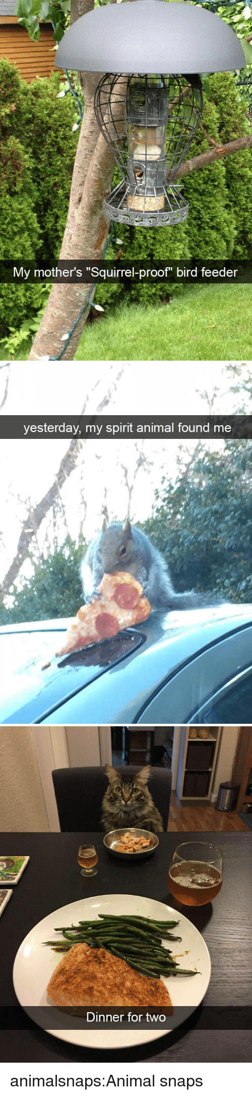 """Target, Tumblr, and Animal: My mother's """"Squirrel-proof bird feeder   yesterday, my spirit animal found me   Dinner for two animalsnaps:Animal snaps"""