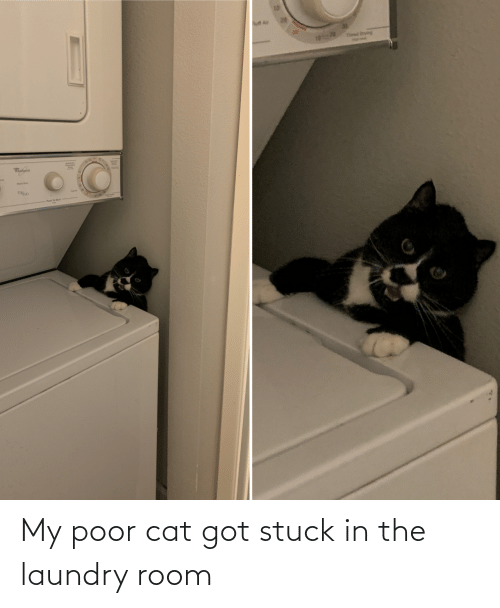 Laundry: My poor cat got stuck in the laundry room