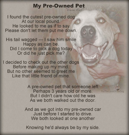 Dogs, Memes, and Saw: My Pre-Owned Pet  I found the cutest pre-owned dog  At our local pound  He looked to me as if to say  Please don't let them put me down.  His tail wagged I saw him smile  Happy as can be  Did I come to pick a dog today  Or did he just pick me?  I decided to check out the other dogs  Before making up my mind  But no other seemed to greet me  Like that little friend of mine  A pre-owned pet that someone left  Perhaps 3 years old or more. Forte  But I didn't care how old he was  As we both walked out the door  FortheLoveofihe Dog  And as we got into my pre-owned car  Just before I started to drive  We both looked at one another  Knowing he'd always be by my side