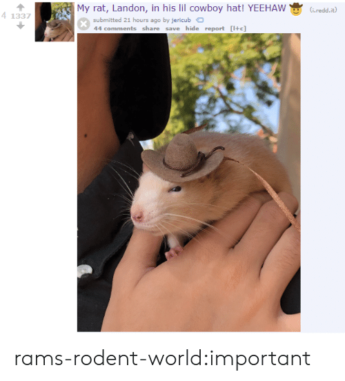 landon: My rat, Landon, in his lil cowboy hat! YEEHAW(Gred.t)  41337  submitted 21 hours ago by jericub  44 comments share save hide report [+c] rams-rodent-world:important