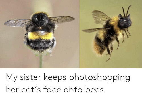Bees: My sister keeps photoshopping her cat's face onto bees