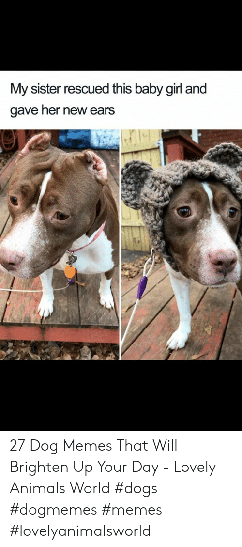 Baby Girl: My sister rescued this baby girl and  gave her new ears 27 Dog Memes That Will Brighten Up Your Day - Lovely Animals World #dogs  #dogmemes #memes #lovelyanimalsworld