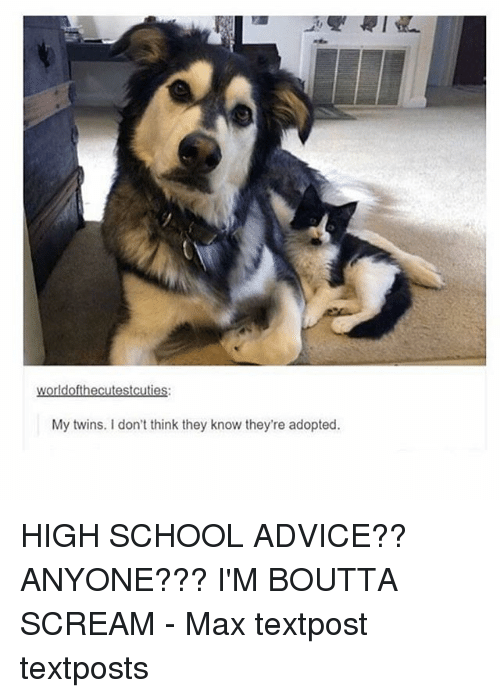 ims: My twins. I don't think they know they're adopted. HIGH SCHOOL ADVICE?? ANYONE??? I'M BOUTTA SCREAM - Max textpost textposts