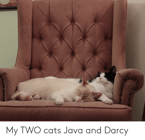 My TWO Cats Java and Darcy | Cats Meme on loveforquotes com