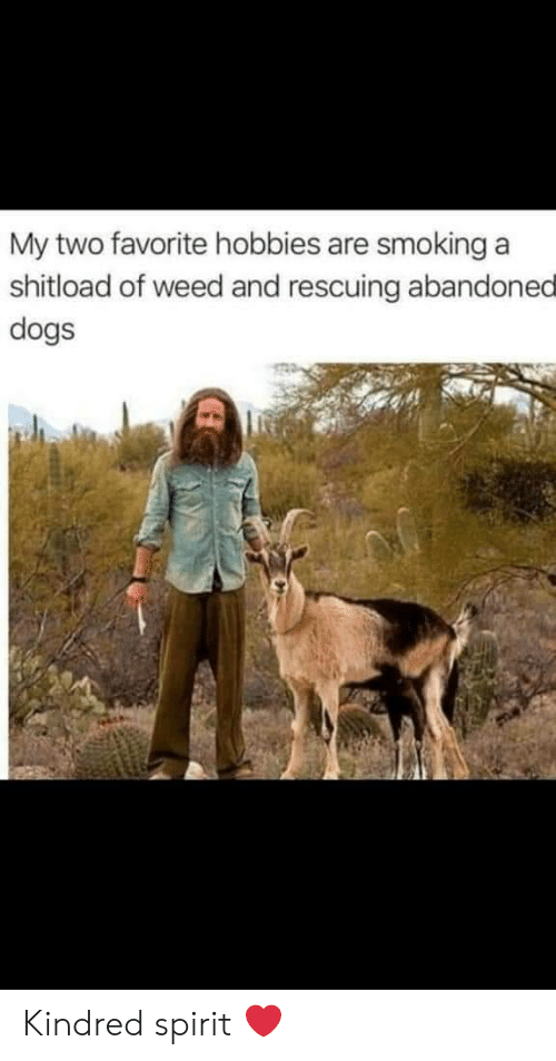 Dogs, Smoking, and Weed: My two favorite hobbies are smoking a  shitload of weed and rescuing abandoned  dogs Kindred spirit ❤️