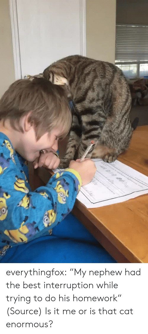 "Aww, Reddit, and Tumblr: n 0.99 everythingfox:  ""My nephew had the best interruption while trying to do his homework"" (Source)   Is it me or is that cat enormous?"