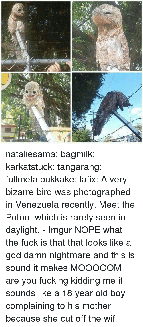 Fucking, God, and Target: nataliesama: bagmilk:  karkatstuck:  tangarang:  fullmetalbukkake:  lafix:  A very bizarre bird was photographed in Venezuela recently. Meet the Potoo, which is rarely seen in daylight. - Imgur NOPE  what the fuck is that  that looks like a god damn nightmare  and this is sound it makes  MOOOOOM  are you fucking kidding me it sounds like a 18 year old boy complaining to his mother because she cut off the wifi