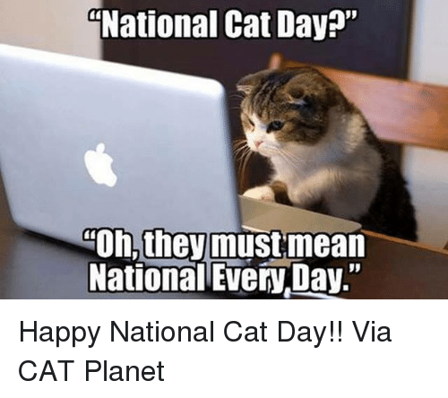 """Happy National Cat Day: National Cat Day?""""  Oh, they must mean  National EveryDay."""" Happy National Cat Day!!   Via CAT Planet"""