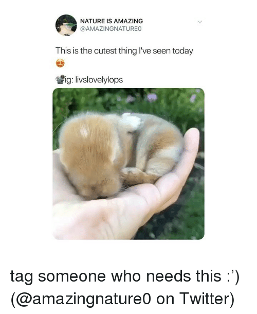 Memes, Twitter, and Nature: NATURE IS AMAZING  @AMAZINGNATUREO  This is the cutest thing l've seen today  嘗ig: livslovelylops tag someone who needs this :') (@amazingnature0 on Twitter)