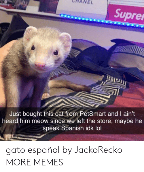 espanol: NEL  Suprer  Just bought this cat from PetSmart and I ain't  heard him meow since we left the store, maybe he  speak Spanish idk lol gato español by JackoRecko MORE MEMES
