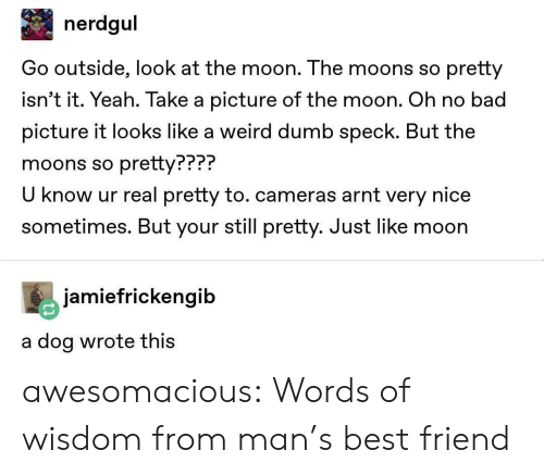Bad, Best Friend, and Dumb: nerdgul  Go outside, look at the moon. The moons so pretty  isn't it. Yeah. Take a picture of the moon. Oh no bad  picture it looks like a weird dumb speck. But the  moons so pretty???  U know ur real pretty to. cameras arnt very nice  sometimes. But your still pretty. Just like moon  PPP?  jamiefrickengib  a dog wrote thiS awesomacious:  Words of wisdom from man's best friend