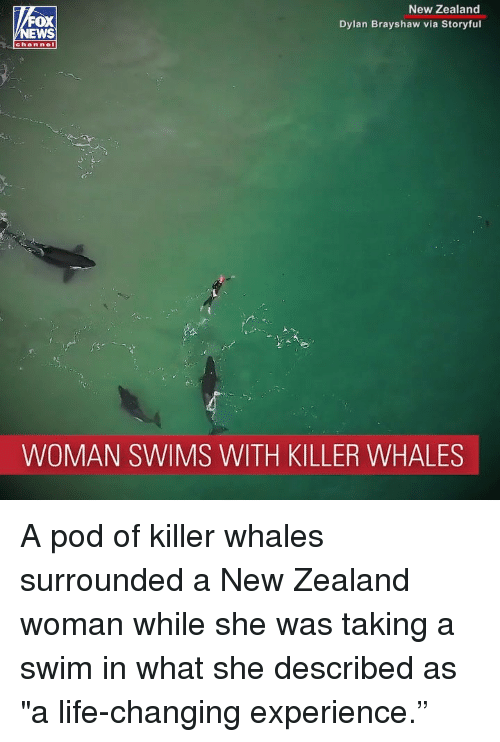 """Killer Whales, Life, and Memes: New Zealand  Dylan Brayshaw via Storyful  OX  channel  WOMAN SWIMS WITH KILLER WHALES A pod of killer whales surrounded a New Zealand woman while she was taking a swim in what she described as """"a life-changing experience."""""""