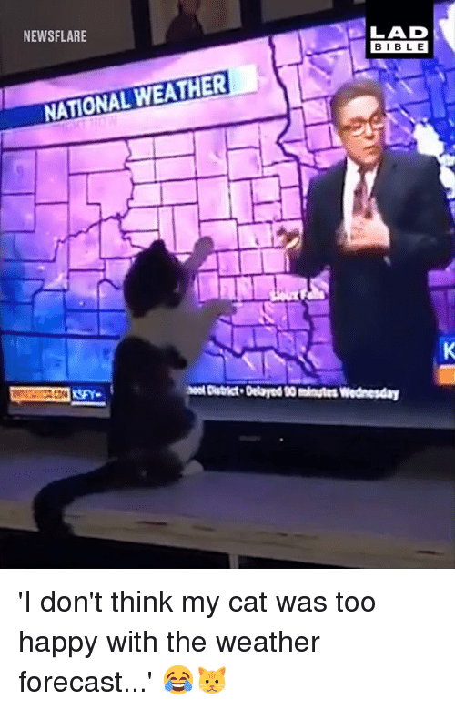 Dank, Bible, and Forecast: NEWSFLARE  LAD  BIBLE  NATIONAL WEATHER  o District Delaryed 00 minutes Wednesday 'I don't think my cat was too happy with the weather forecast...' 😂🐱