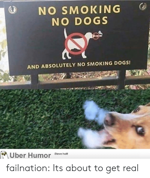 Dogs, Smoking, and Tumblr: NO SMOKING  NO DOGS  AND ABSOLUTELY NO SMOKING DOGS!  Uber Humor  Steve holt! failnation:  Its about to get real