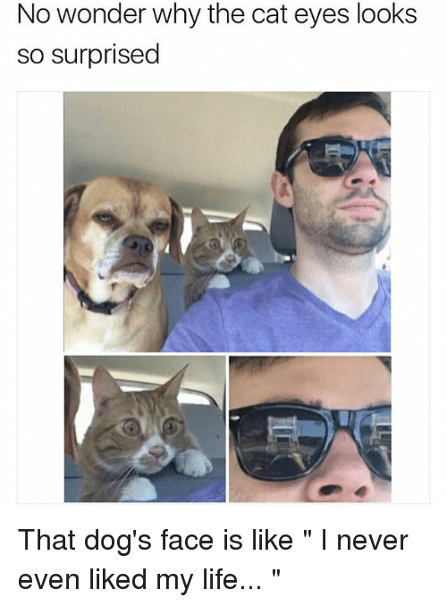 """Dog Faces: No wonder why the cat eyes looks  so surprised That dog's face is like """" I never even liked my life... """""""