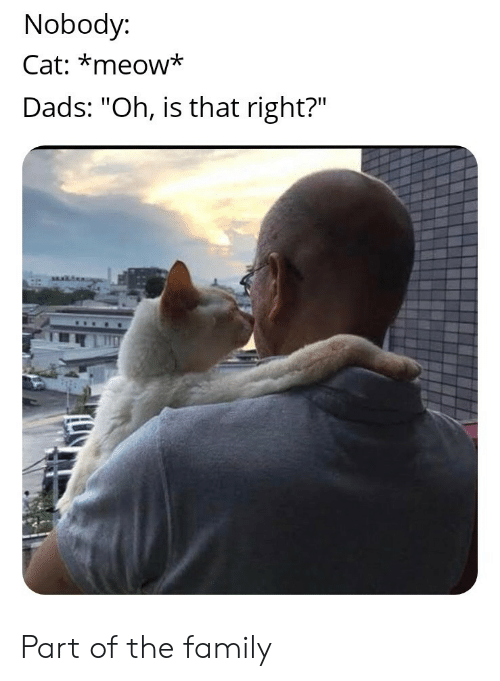 "Family, Cat, and Meow: Nobody:  Cat: *meow*  Dads: ""Oh, is that right?"" Part of the family"